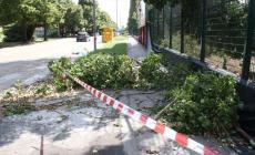 A 72 ore dal temporale <br/> rami e alberi rimangono a terra