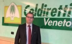 Cerantola nuovo presidente <br/> di Coldiretti Veneto