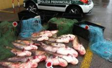 Fermati con un quintale di pesce <br/> nei guai quattro pescatori di frodo