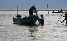 La guerra delle vongole <br/> fa tremare la pesca