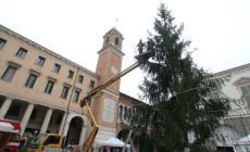 Il Natale è quasi salvo <br/>due alberelli in piazza Vittorio