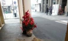 Raid notturno dei vandali <br/> rubato un alberello di Natale