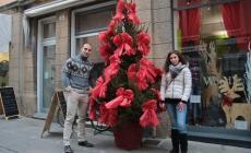 Gli alberi di Natale cercano casa  <br/> appello per salvarli dalla discarica