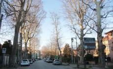 A Rovigo saranno tagliati altri 33 alberi