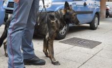 Il cane antodroga Orry ispeziona <br/> le classi dell'istituto Enaip