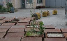 Cinquantamila euro di cubi <br/> marciscono nel deposito comunale