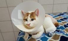 Il primo gatto bionico d'Italia <br/> adottato dall'Oipa di Rovigo