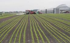 """Brexit, l'agricoltura non rischia  <br/> """"E' assolutamente gestibile, anzi..."""""""