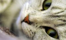 Bocconi avvelenati nelle frazioni di Lendinara, morti tre gattini
