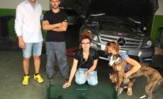 Micio incastrato nell'auto del sindaco Pigaiani