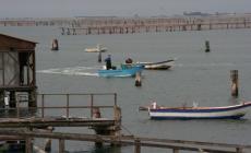 Nasce il Consorzio Distretto ittico di Rovigo e Chioggia