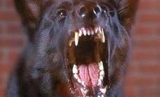 Azzannata da un cane mentre era per strada, tragedia sfiorata