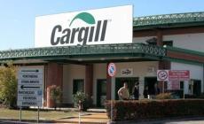 """""""Nessun focolaio in Cargill"""""""