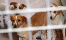 19 cani in condizioni pietose, i padroni finiscono nei guai