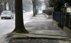 Via Tisi, il comune ferma le ruspe: i tigli (per ora) sono salvi