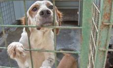 Quasi 500 cani salvati in un anno dai veterinari dell'Ulss