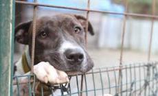 Ammazza a fucilate il proprio cane nel cortile del Consorzio di bonifica