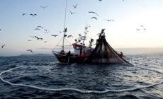 Pesca, mercoledì l'incontro a Venezia sui progetti di cooperazione costiera