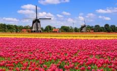 In Olanda al festival dei tulipani