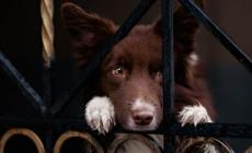 Ad Adria i cani di razza nel mirino dei ladri