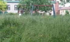 L'erbaccia ricopre strade, cimiteri e parchi pubblici