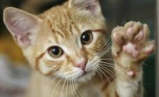 """Giallo """"felino"""" a Porto Viro, gatti scomparsi da settimane"""