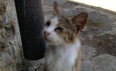 Strage di gatti con la stricnina, indagano i carabinieri