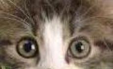 Decine di gatti scomparsi: l'allarme corre in rete