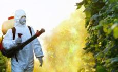 Ambiente, il Comune a Bristol presenta il progetto di una città senza pesticidi