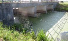 Strage di pesci tra Ceresolo e Nuovo Adigetto