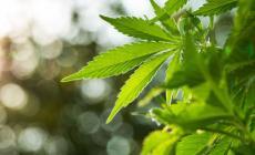 Regalava gli  spinelli e coltivava marijuana