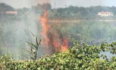 Brucia la scarpata del Canalbianco ad Adria