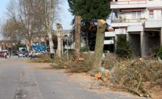 Cura degli alberi, ora regole ferree a Rovigo