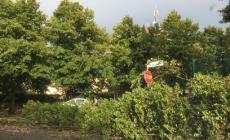 Mezz'ora di tempesta con vento e fulmini, le strade vanno in tilt
