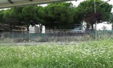 Porto Tolle, il giardino dell'Ipsia è una giungla