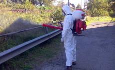 E' guerra totale contro le zanzare