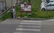 Zebre da circo in Commenda Est