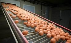Uova contaminate, dopo gli allevamenti tocca ai ristoranti etnici