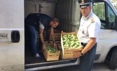 Il furgone delle pompe funebri viaggiava pieno di frutta