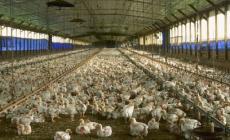 L'influenza aviaria si avvicina al Polesine