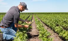 Agricoltura più sostenibile, le proposte per un futuro  in mano ai giovani che crei lavoro
