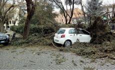 Tempesta di vento, devastata piazza Merlin