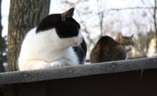 Oasi felina, 400 adozioni in un anno grazie al lavoro dei volontari