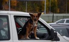 """Si schianta e rischia di morire assiderato. Salvato dal cane: lo veglia e """"chiama"""" i poliziotti"""