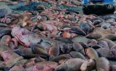 Massacri di pesce con l'elettricità: ora è guerra ai predoni