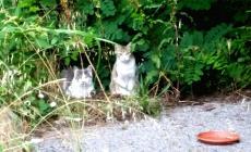 Dal Comune i fondi per le oasi feline