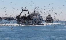 Uno studio, soldi e lavori per salvare la pesca