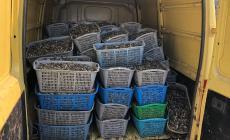 Sequestrata una tonnellata di pesce in nero destinato alle nostre tavole
