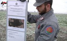 """""""Fanghi inquinati nei campi e falsi analisi"""": il Comune va in guerra"""