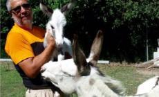 La riabilitazione qui si fa con gli animali